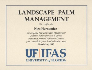 Landscape-palm-management-Floridas-Eden