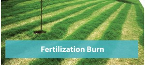 Fertilization-burn-repair-Orlando_Slider1-01-01