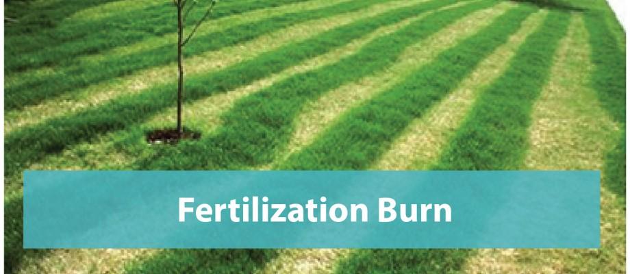 Fertilization-burn-repair